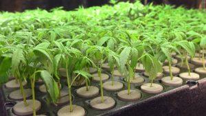 Gurpreet Dhillon encourages resident input on cannabis